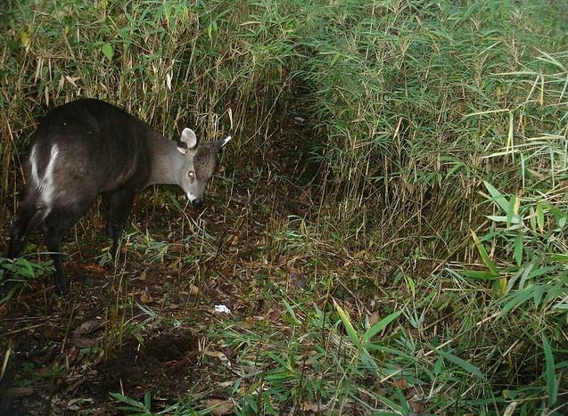 红外触发感应相机拍摄的野外动物影集