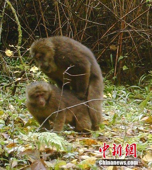 野外动物触发远红外相机年初取得的战果