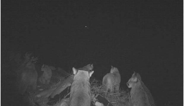 触发相机拍摄动物